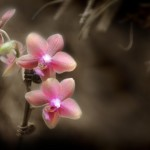 orchid2_